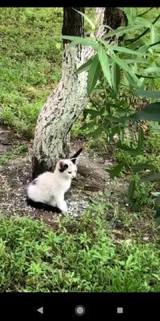 Отдам котят. Очень красивые! Возраст примерно 1,5-2 месяца