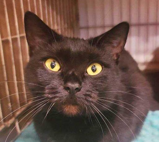 Муся, черная кошечка 10мес, ищет семью! кошка кот котенок