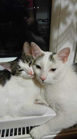 Kociaki szukają nowego domu