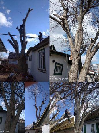 Спиляємо небезпечні дерева