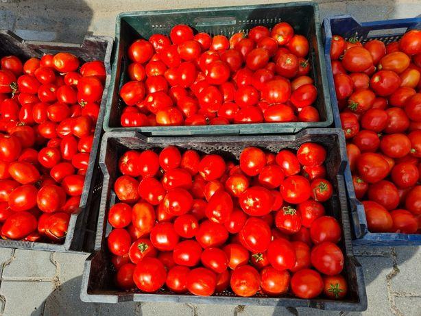 Pomidor gruntowy,  polny- ostatnie dni sprzedaży.