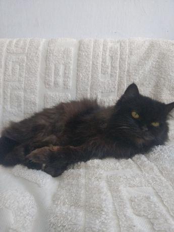 Прекрасная кошачья бабушка в поисках дома (кошка)