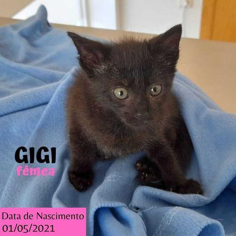 Gatinha 3 meses para adoção (Gigi)
