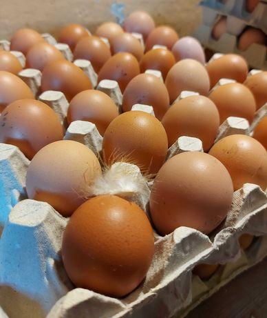 Jajka wiejskie, wolny wybieg TANIO :)
