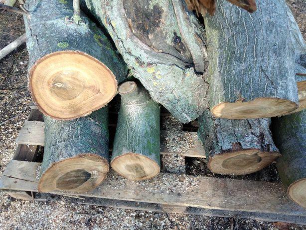 Drzewo orzech