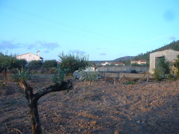 CASA C/ Terraço, c/Terreno Arvores de Fruto e Olival