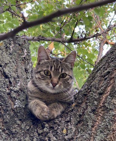 Кошечка тигруля