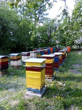 Sprzedam pszczoły z ulami.