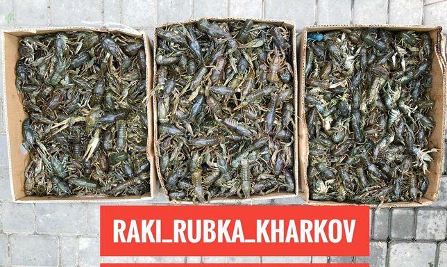 Раки доставка по Харькову осётр камбала кефаль