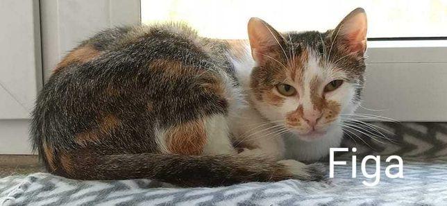 Spokojna kotka pilnie szuka domu z innymi kotami