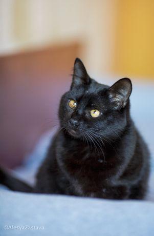 Спасите из приюта милейшее ласковое создание кота Салли кастрирован