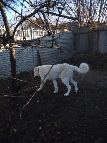 Авто-доставка животных по Украине