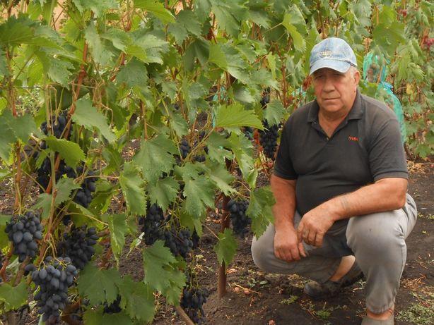 Саженцы элитных сортов и форм винограда