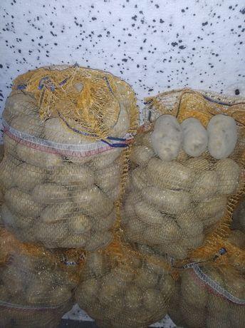 Ziemniak jadalny odmiana denar.