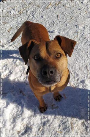 Atlas- super pies do adopcji