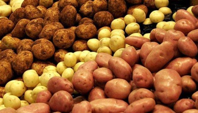 Продам картоплю білу червону+380685374685