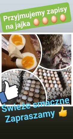 Jajka krem białe wiejskie swojskie eko kury nioski roczne s l m
