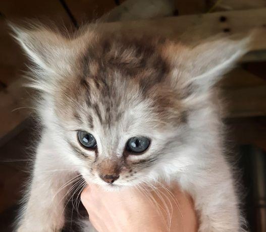 Котята  в гарні руки