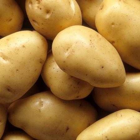 Batatas Brancas Novas (Kenebec)