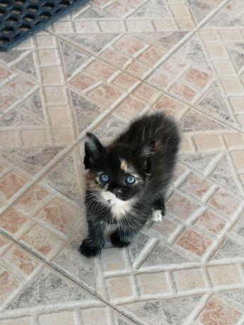 Dá-se gatinha 1 mês e meio