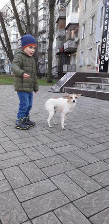Маленькая собачка ищет дом