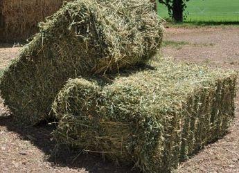 Сіно люцерни та суданської трави в тюках