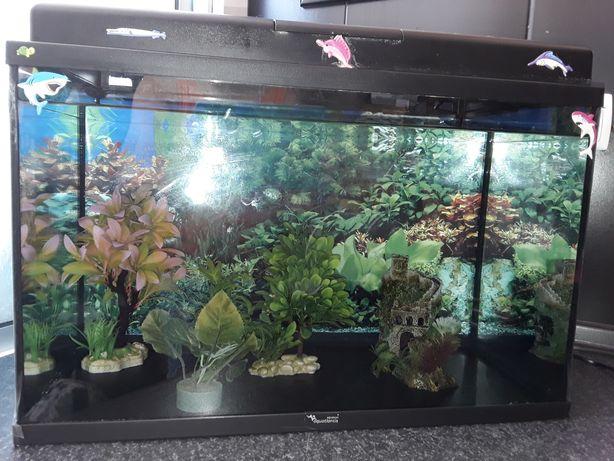 Aquário de peixes de 60 litros de água  com iluminação em bom estado