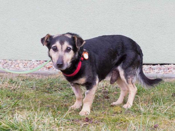 Maxiu - mały i łagodny psiak