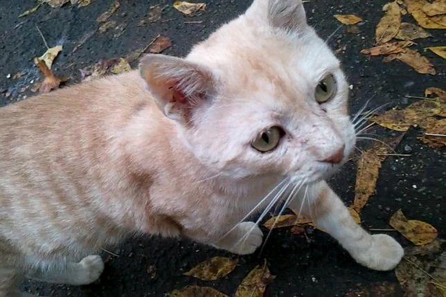 Исчез Кот в районе улицы Черняховского. Помогите найти! Награда!