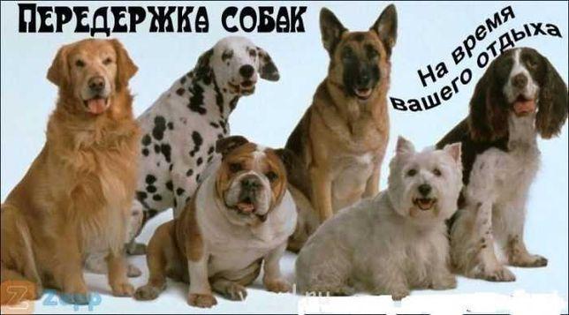 Передержка собак Киевская область