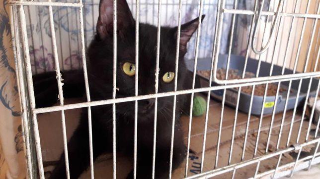 Черный котик ищет добрые ручки