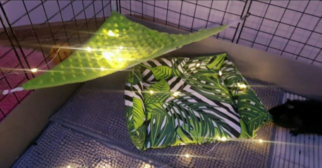 Zestaw wypoczynkowy dla świnki morskiej dżungla