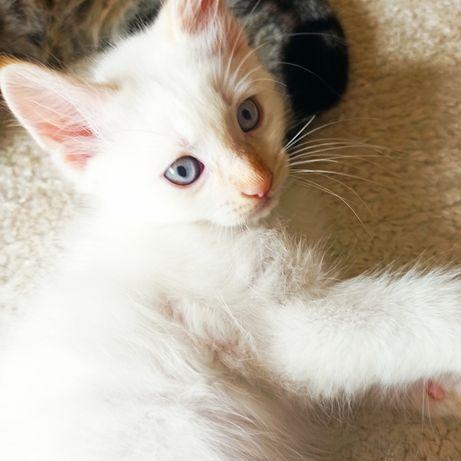 Gatinha e gatinho para adoção responsável