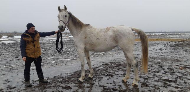 Продам лошадь ...