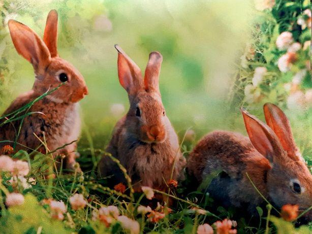 пасхальное полотенце, покрывало с принтом зайцы, кролики, скатерть