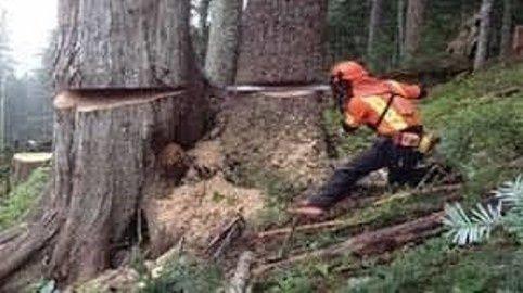 Wycinka drzew Czerwionka-Leszczyny