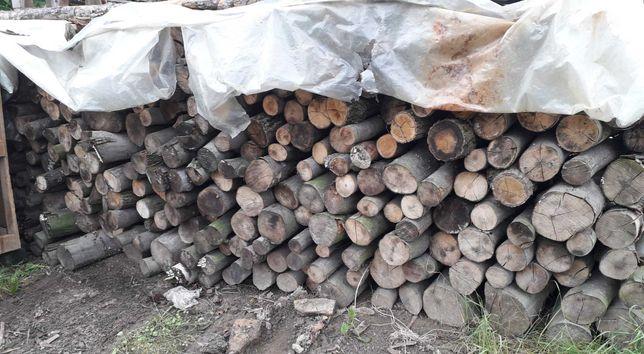 Drzewo drewno bukowe opałowe