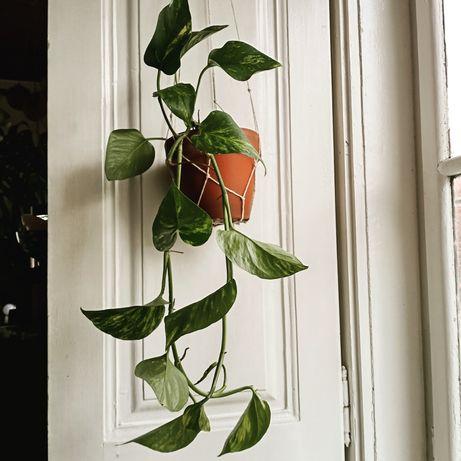 Plantas suspensas em vaso com vários tamanhos