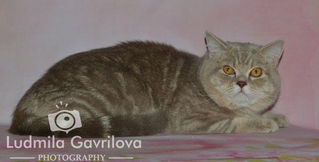 Шикарный прямоухий котик приглашает на свидание вислоухих кошечек.
