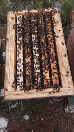 Enxames de abelhas bem povoados