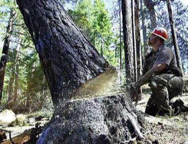 Обрізка дерев.Демонтаж.