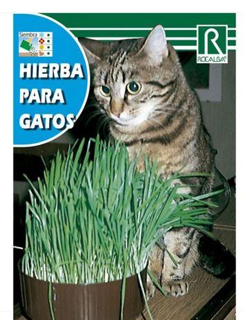 Erva para gatos - embalagem nova