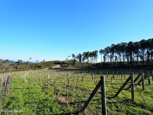 Terreno de construção / agrícola com plantação de vinha, ...