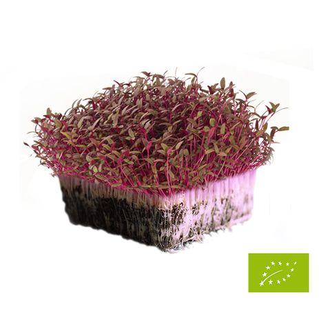 Sementes para Micro Vegetais (Micro greens)