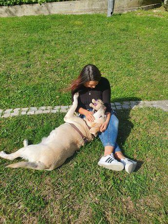 Dog Walking e PetSitting LISBOA