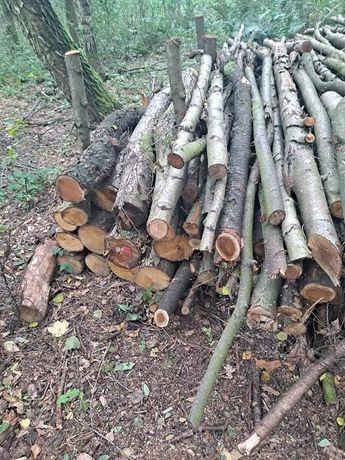 Drewno drzewo drzewo