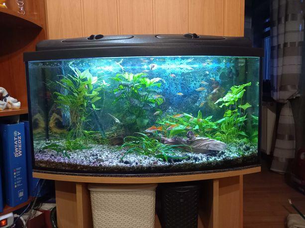 Akwarium profilowane 112 l