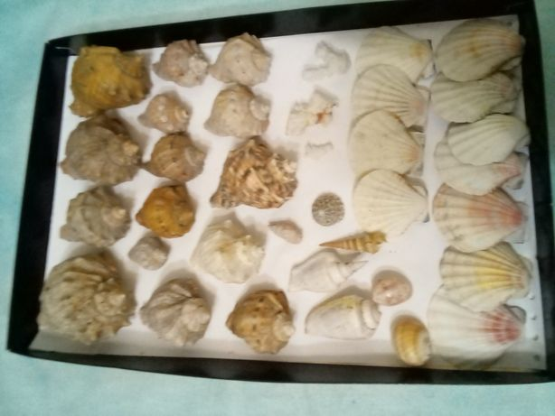 Ракушки и кораллы, десертные тарелки
