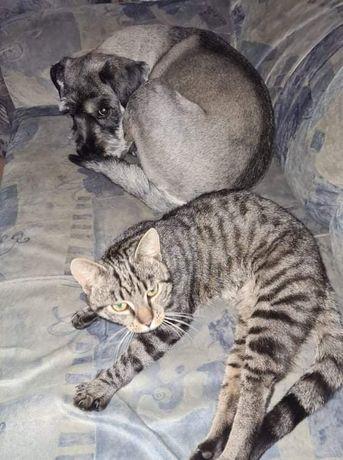 Zaginął roczny kotek krolikowice