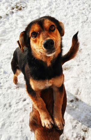Стрелка- маленькая, молоденькая собачка ищет дом